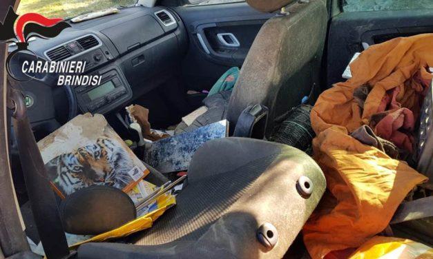 In giro per Ceglie con l'auto e cinque cani in stato di sporcizia ed escrementi. Denunciata la proprietaria